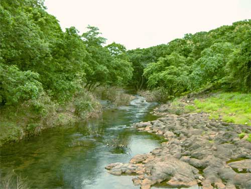 Sanjay Gandhi National Park: Photo credit: Wikipedia