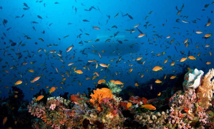 Photo credit: visitmaldives.com