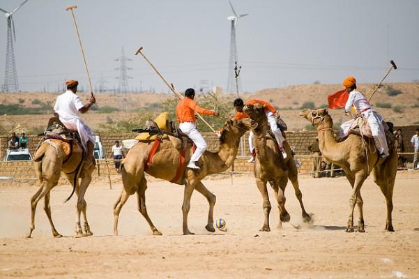 Camel Polo Jaipur