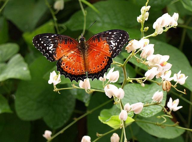 Butterfly Farm malaysia1