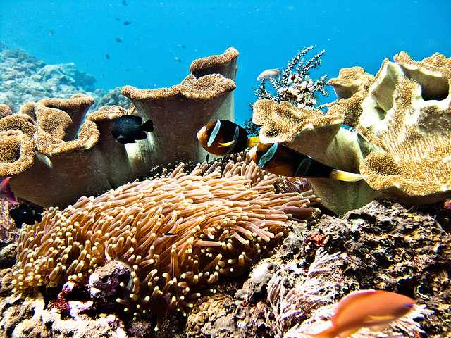 Snorkeling and Diving in Bali-Nusa Lembongan