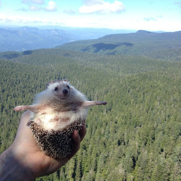 biddy the hedgehog world traveler instagram (9)
