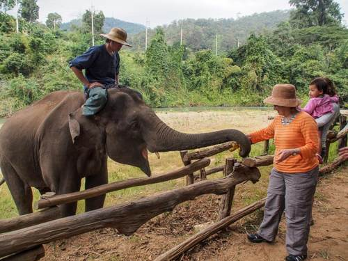 Elephant Feeding Camp